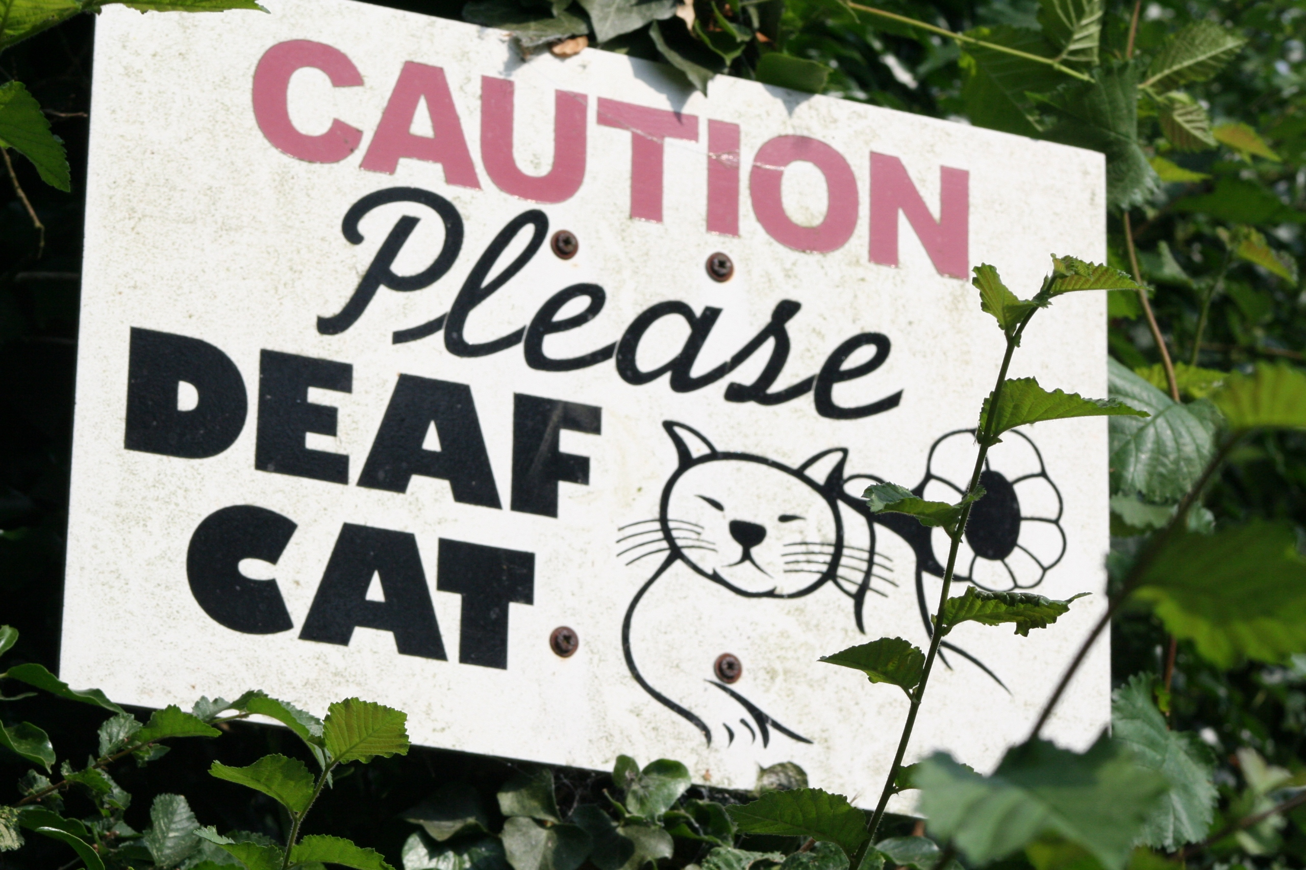 Deaf Cat